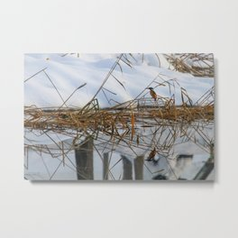 Kingfisher, Alcedo atthis, on frosty cane, bush covered with snow, Reflecting in water Metal Print