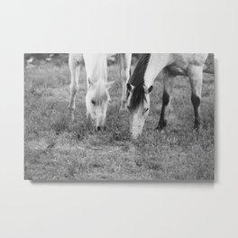 Horses Eating Metal Print