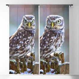 Little Owl Blackout Curtain