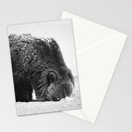 Alaskan Grizzly Bear in Snow, B & W - 2 Stationery Cards