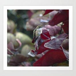 Hummingbird Hiding in Red Bud Tree Art Print