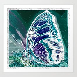Insect Models: Beautiful Butterflies 09-05 Art Print