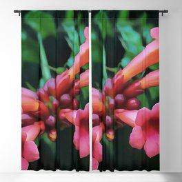 Coral Pink Trumpet Honeysuckle Blackout Curtain
