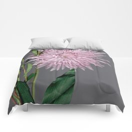 pale pink aster botanical Comforters