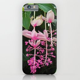 Pink Lantern I iPhone Case