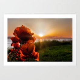 Poppies watching the sun set Art Print