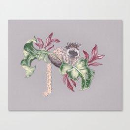 Bearded Tamarin Canvas Print