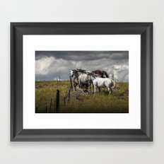 Western Horses by the Pasture Fence under a Cloudy Sky in Montana Framed Art Print