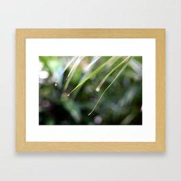 Plantdrops Framed Art Print