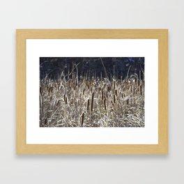 Bulrushes Framed Art Print
