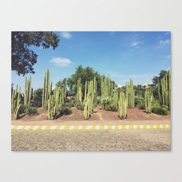 Teotihuacan Cacti Canvas Print