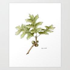 Pin Oak Art Print