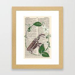 Entomologic Pepper Weevil Framed Art Print