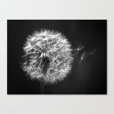 Dandelion In BW Canvas Print