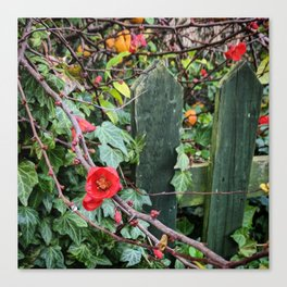 Red Flowers Over a Green Fence Canvas Print