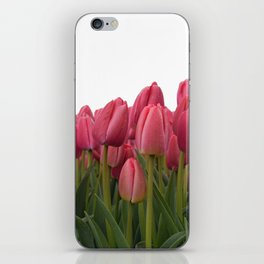 Tulips Field #7 iPhone Skin