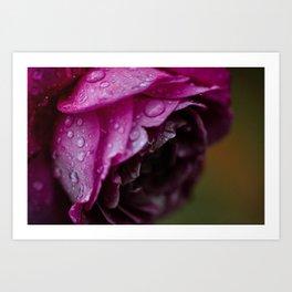 Petals & Raindrops Art Print