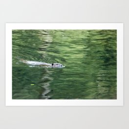 Beaver on an Evening Swim Art Print