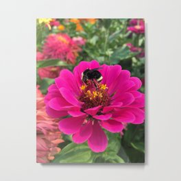 Pollen Covered Bee Metal Print