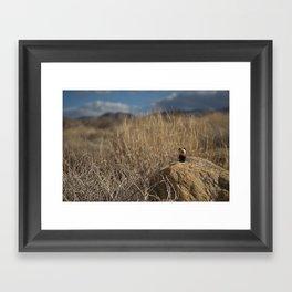 Desert Dog Framed Art Print