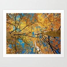 aspens from below Art Print