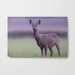 ROE DEER DOE Metal Print