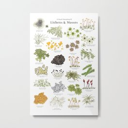 Lichens & Mosses Metal Print