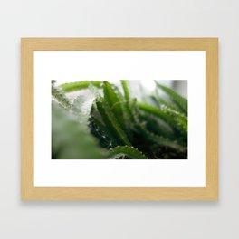 Pitahaya Framed Art Print