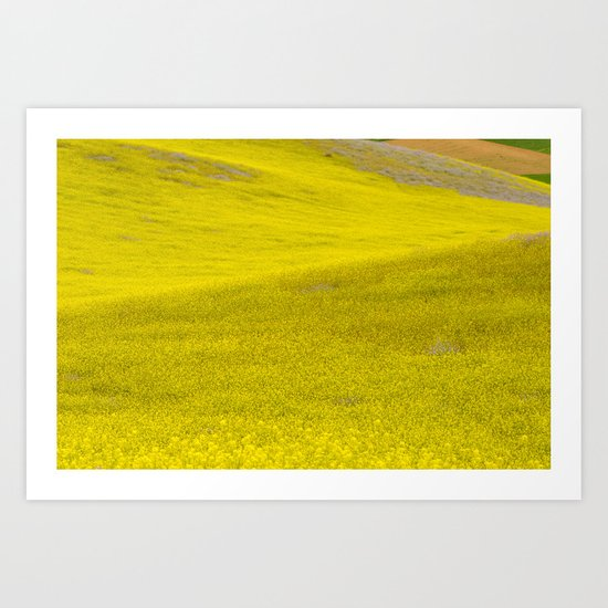 Fields of flowers Art Print