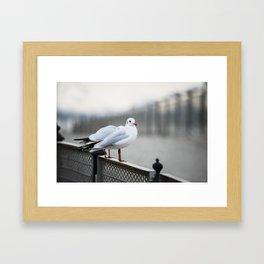 Sitting on The Fence Framed Art Print