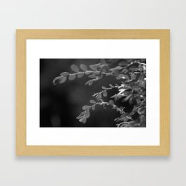 A Random Ass Plant In Black And White Framed Art Print