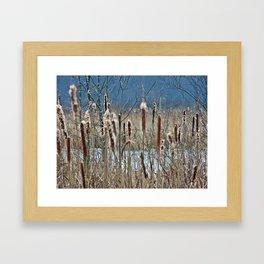 Cattail, Bulrush and Wetlands Framed Art Print