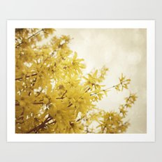 Dreamy Forsythia  Art Print