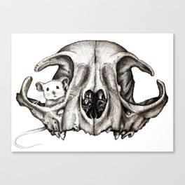 The Game of Cat & Mouse #6  Canvas Print