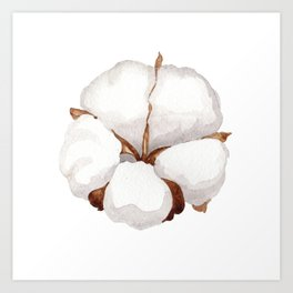 Cotton Flower 02 Art Print