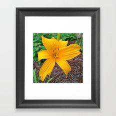 Yellow Raindrops Framed Art Print