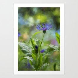 Splendor in the Garden Art Print