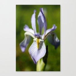 Wild Iris 2 Canvas Print