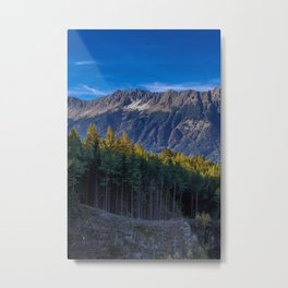 Arch of Larch Metal Print