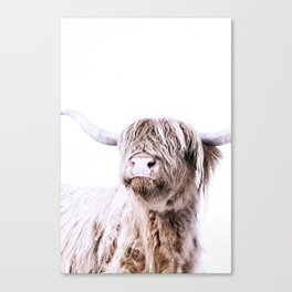 HIGHLAND CATTLE PORTRAIT Canvas Print