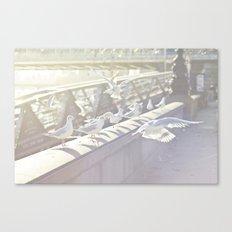 Birds playing on sunshine Canvas Print