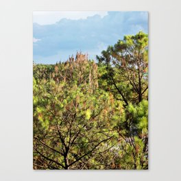 Beyond the Treetops Canvas Print
