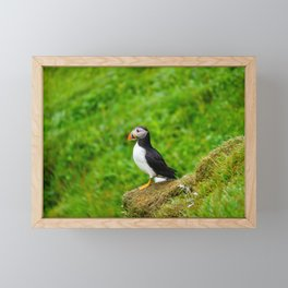 The Puffins of Mykines in the Faroe Islands I Framed Mini Art Print