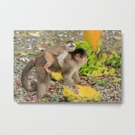 Mother and Baby Monkey Metal Print