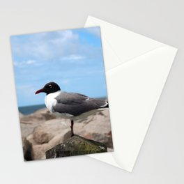 Laughing Gull Stationery Cards