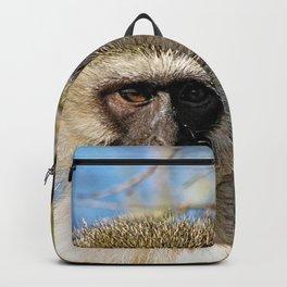 Velvet Monkey Closeup Portrait Backpack