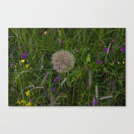 Field of flowers and Dandelions Canvas Print