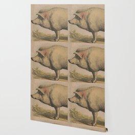 Vintage Illustration of a Domesticated Pig (1874) Wallpaper