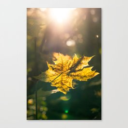 Autumn leaf in sunset Canvas Print