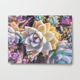 green and pink succulent plant garden background Metal Print